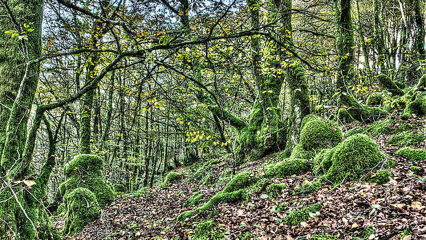 Weston Westmoreland - The Mossy Creatures of the  old Beech Forest 5