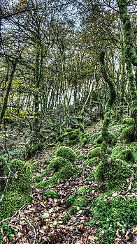 Weston Westmoreland - The Mossy Creatures of the  old Beech Forest 6