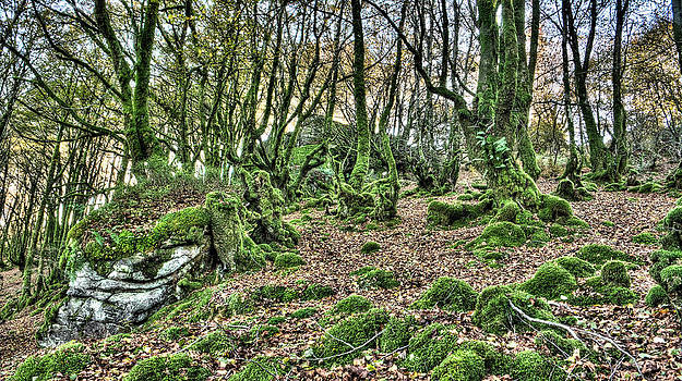 Weston Westmoreland - The Mossy Creatures of the  old Beech Forest 7