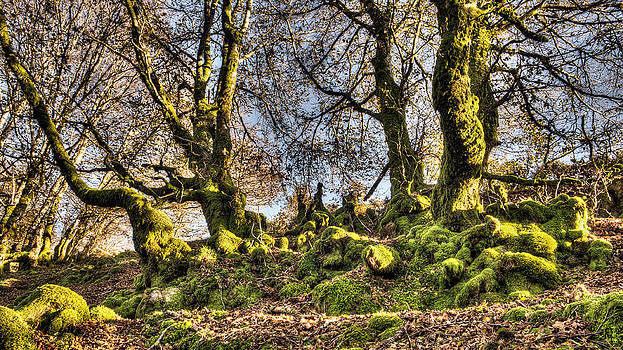 Weston Westmoreland - The Mossy Creatures of the old Beech Forest 9
