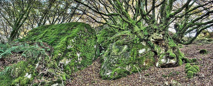 Weston Westmoreland - The Mossy Creatures of the old Beech Forest