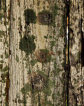 Erin Tucker - The Mossy Fence
