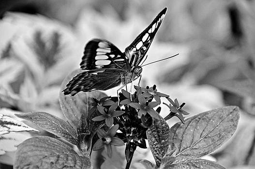 The Nature of Black and White by David Earl Johnson