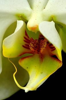 The nectar by Silvie Gunawan
