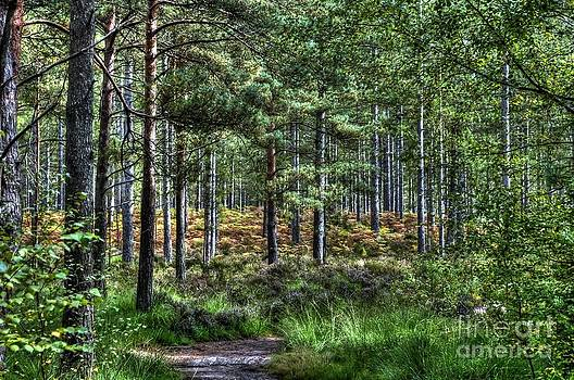 The New Forest by Skye Ryan-Evans