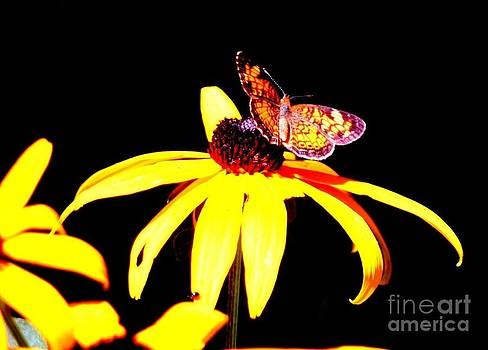 The Night Of The Butterfly  by Jack  Martin