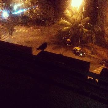 The Night Watchman? #bird #silhouette by Rachit Vats