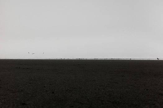 Marcello Cicchini - The No2 Ocean Shores