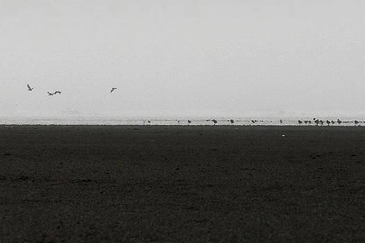 Marcello Cicchini - The No4 Ocean Shores