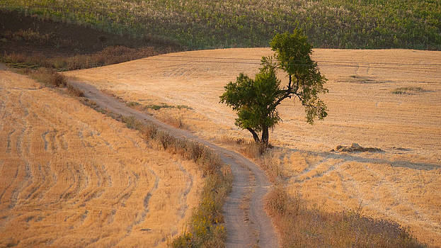 The old almond tree on the road by Jawaharlal Layachi