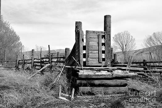 The Old Cattle Chute by Amber Whiting Bradley
