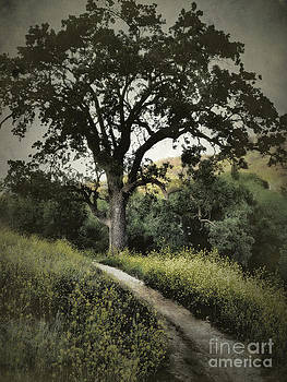 The Old Chumash Trail by Parrish Todd