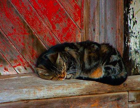 The Old Mill Cat by Julie Dant
