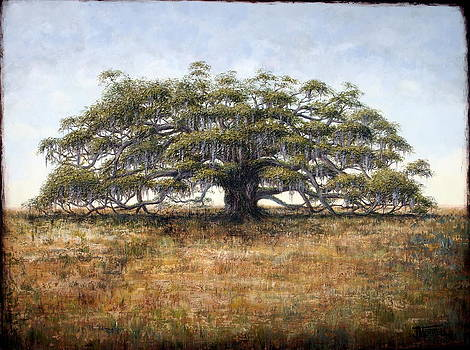 The Old Oak Tree by Judy Merrell