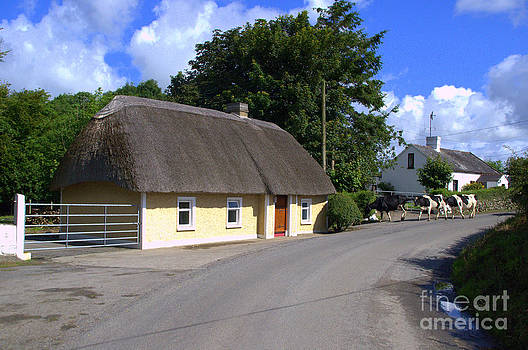 Joe Cashin - The old thatched cottage