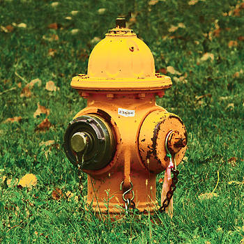 The Old Yellow Fire Hydrant by Lindsay Stone