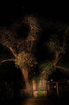 The Ombalantu baobab tree in Namibia  by Grobler Du Preez