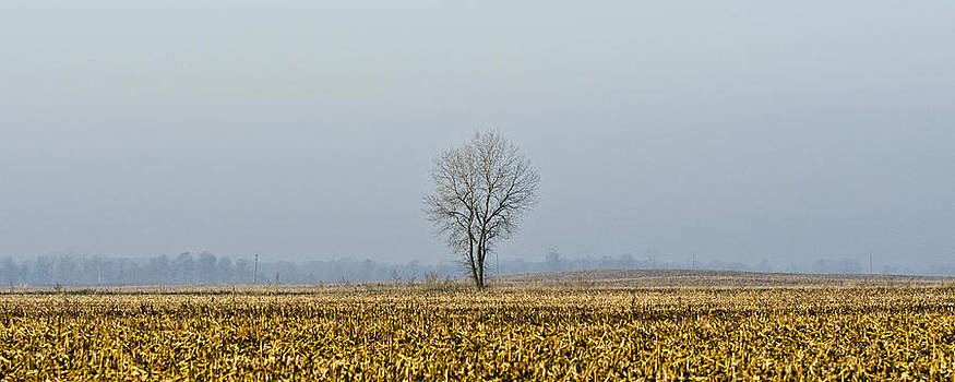 The One Tree by James Blackwell JR