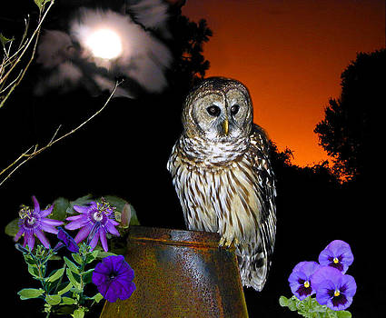 The Owl by Wayne Ritt