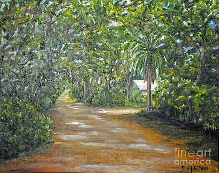 Carolyn Shireman - The Palm Path