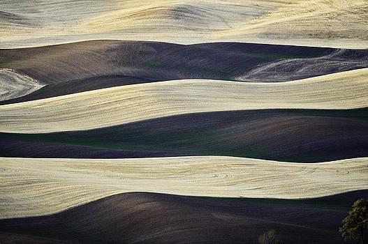 The Palouse by Thomas Chamberlin