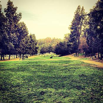 The Park by Barry Shereshevsky