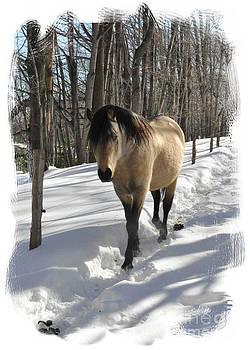 The Paso Fino Stallion Named Brio by Patricia Keller
