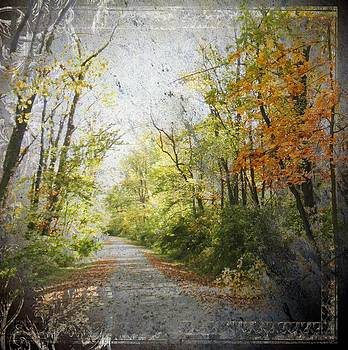 The Path Amongst The Trees by Carolyn Meuer-Pickering of Photopicks Photography and Art