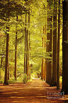 LHJB Photography - The path in the forest