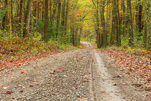 The Path in the woods by Ranjana Pai