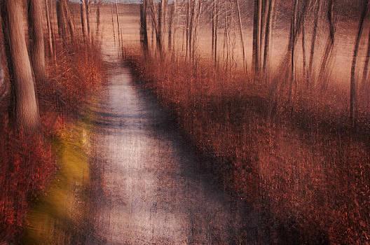 The Path by Jay Krishnan