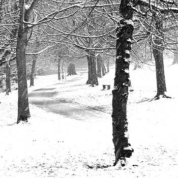 The Path by Karin Ubeleis-Jones
