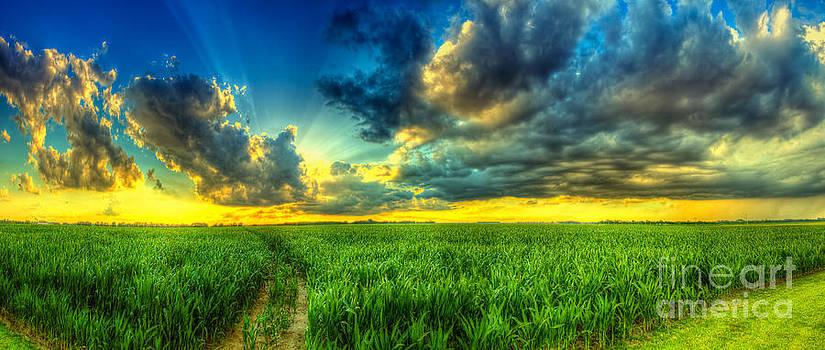 The path to lightness by  Caleb McGinn