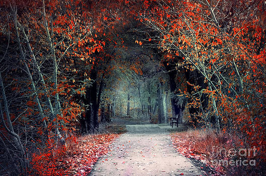 The Pathway of Disappearing Colour by Tara Turner