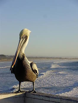 The Pelican by Lisa Lieberman