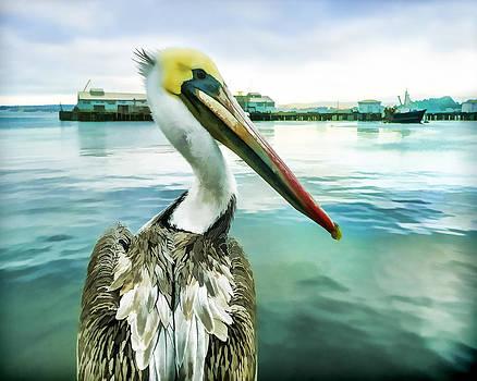 Priya Ghose - The Pelican Perspective