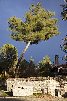 Ramunas Bruzas - The Pine