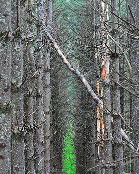The Pines by Ben  Keys Jr