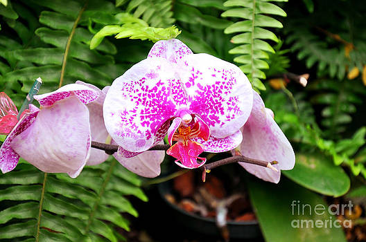 Andee Design - The Pink Puffy Orchid