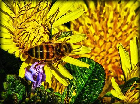 Joe Bledsoe - The Pollenator