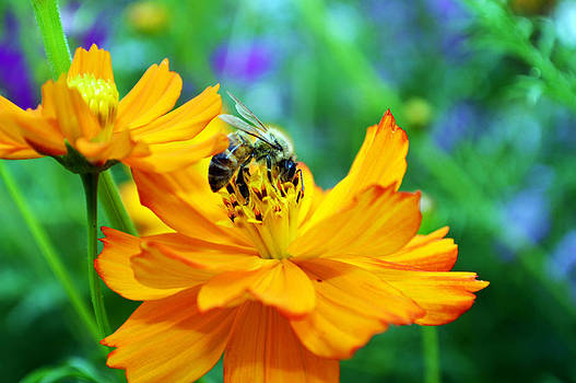 Cindy Nunn - The Pollinator