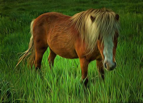 Ray Van Gundy - The Pony
