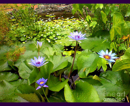 The Pretty Pond And Perfect Petals by Kandayia Ali