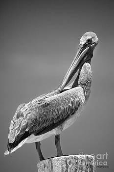 Michelle Constantine - The Proper Pelican