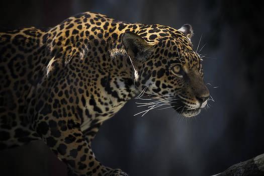 The Prowling Jaguar by Michael Misciagno