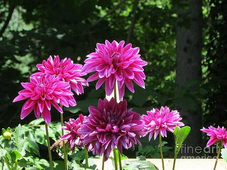 The Purple Garden by Stephanie  Varner