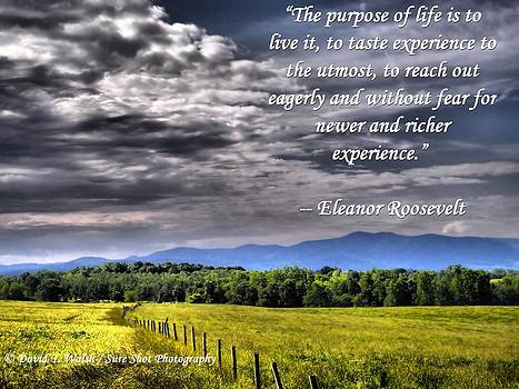 The Purpose of Life by David Walsh