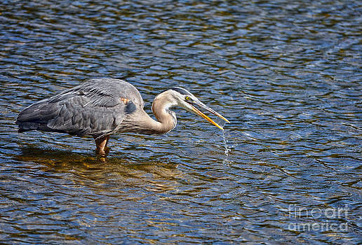 The Quenching - Heron by Skye Ryan-Evans