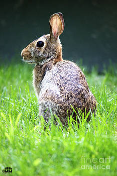 The Rabbit by Dheeraj B