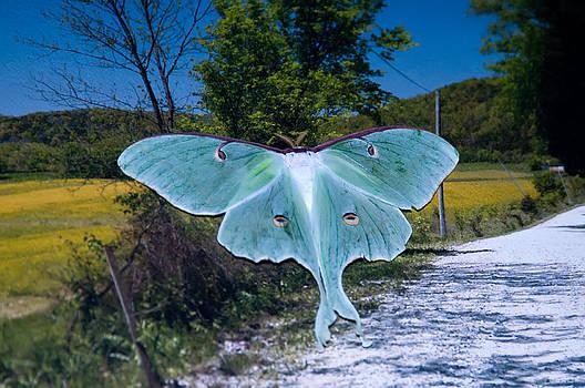 Randall Branham - THE RARE LUNA MOTH